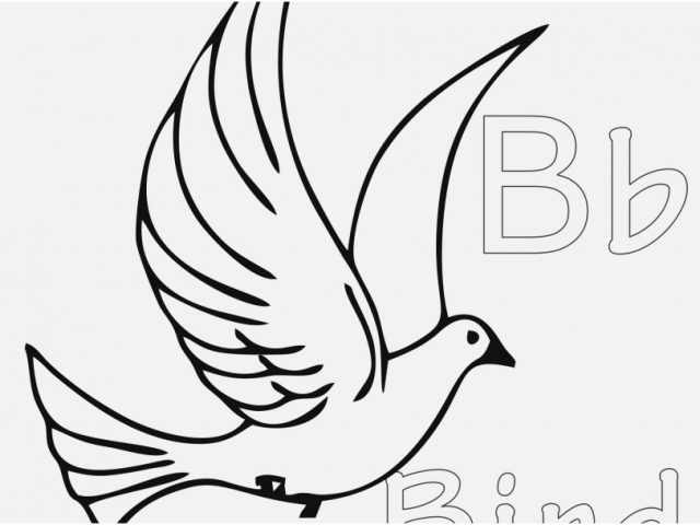 640x480 Bird Coloring Pages Photographs Free Bird Coloring Pages