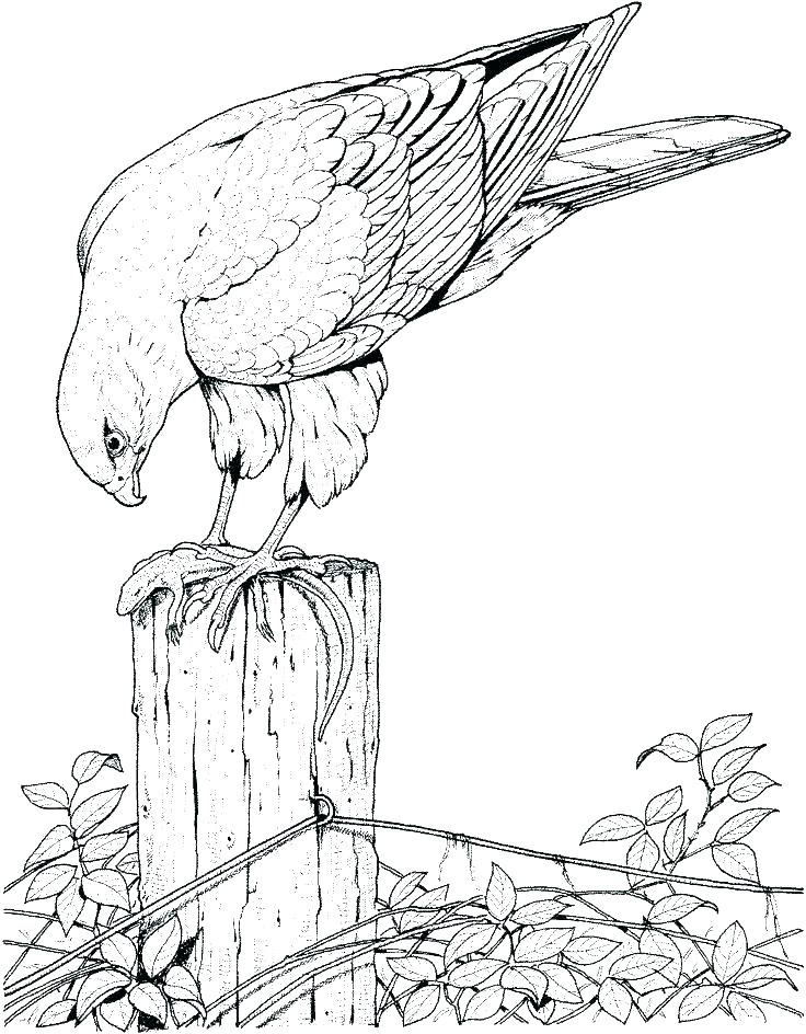 736x944 Free Bird Coloring Pages As Well As Free Bird Coloring Pages Click