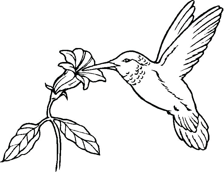 738x566 Free Printable Bird Coloring Pages Interesting Design Angry Birds