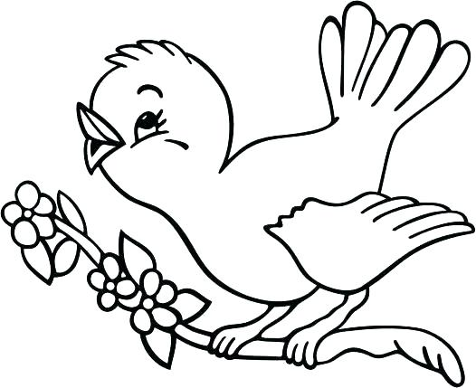 526x429 Gangsta Coloring Pages Bird Coloring Pages Bird Coloring Pages