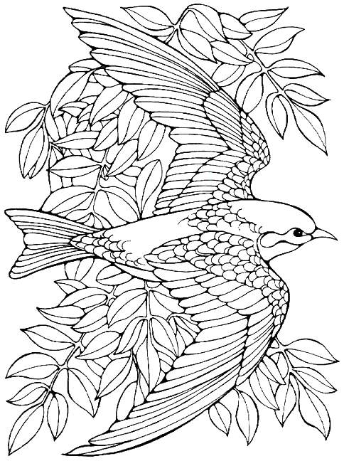 484x648 Printable Advanced Bird Coloring Pages For Adults Free