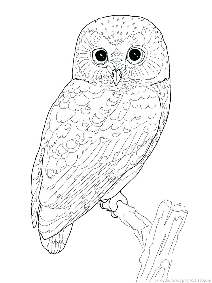 736x980 Baby Bird Coloring Page Bird Coloring Books Cute Bird Coloring