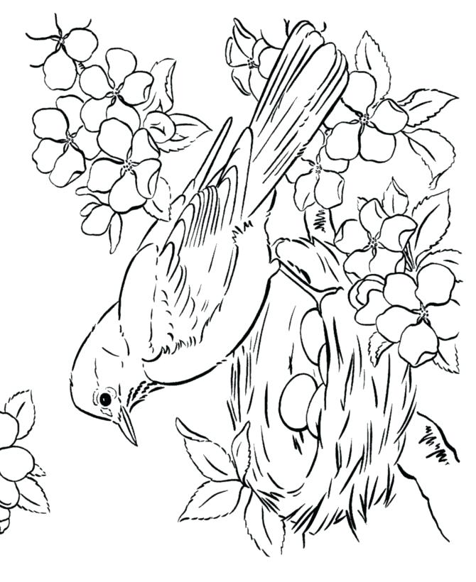 670x820 Bird Coloring Page Best Bird Coloring Pages Ideas On Flower New