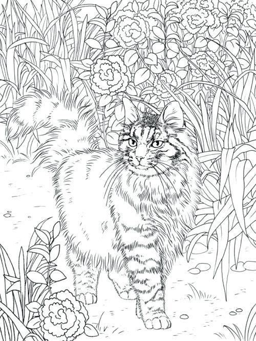 500x667 Cat Coloring Book Coloring Book Color Cat Coloring Book Cat
