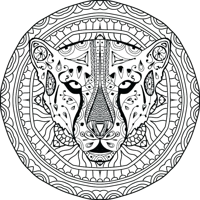 800x800 Cheetah Coloring Pages Coloring Pages Of Cheetahs Coloring Pages