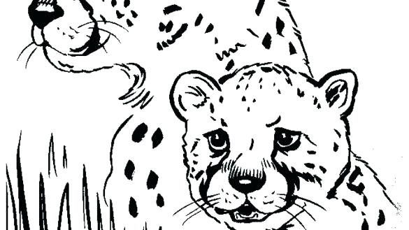 585x329 Cheetah Coloring Pages Coloring Pages Of Cheetahs Free Printable