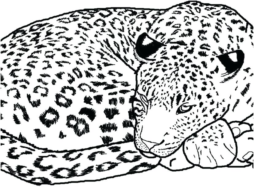 827x609 Cheetah Coloring Pages Animals Coloring Pages Photo Cheetah