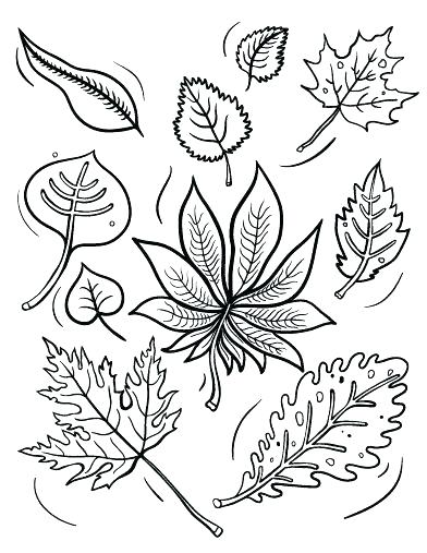 392x507 Free Printable Fall Leaves Stationery Kids Coloring Leaves