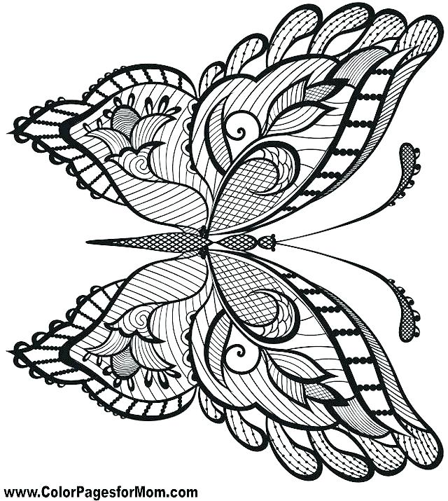 640x715 Free Coloring Pages Flowers And Butterflies Butterfly Coloring