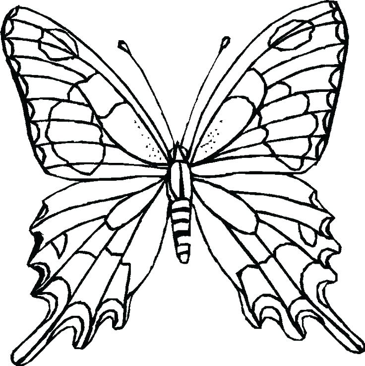 736x737 Free Coloring Pages Flowers Butterflies Flowers