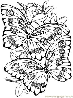 236x315 Image Result For Coloring Flowers Butterflies Dragonflies