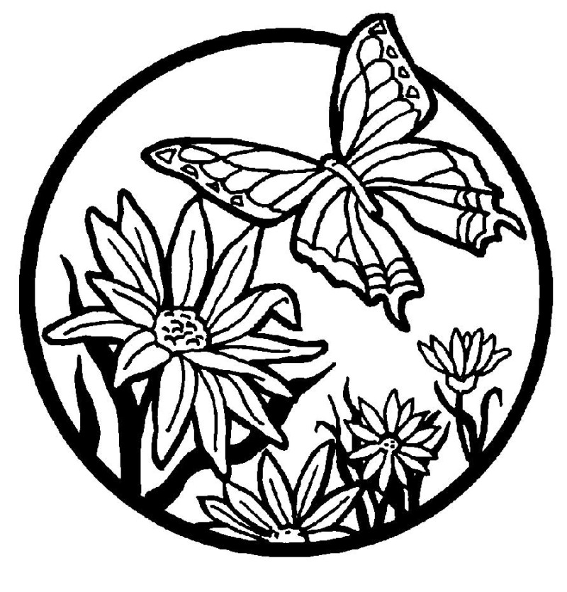 800x835 Printable Coloring Pages Flowers And Butterflies Butterfly