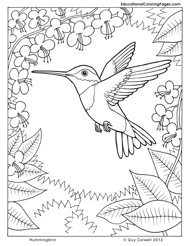 612x792 Nature Coloring Pages Coloring Pages For Adults Nature Nature