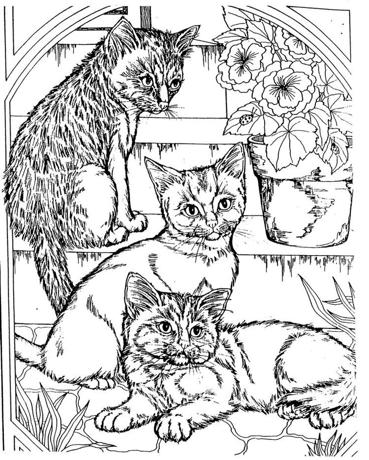 Free Coloring Pages Of Cats And Dogs