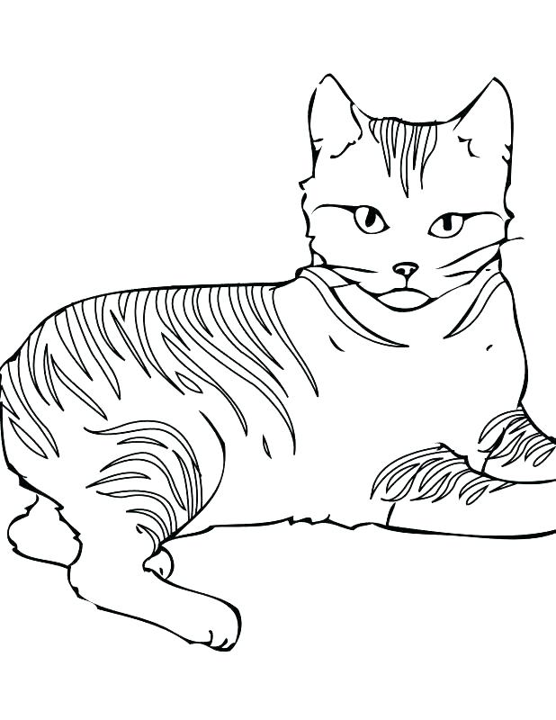618x800 Warrior Cats Coloring Pages Free Coloring Pages Of Cats Coloring