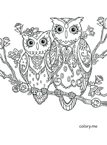360x490 Baby Owl Coloring Or Owl Print Out Coloring Pages Owl Coloring
