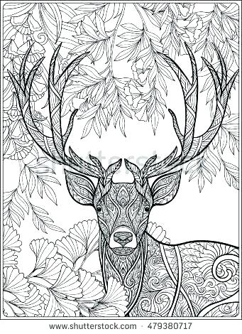 341x470 Deer Coloring Pages Free Deer Coloring Pages Deer Coloring Pages