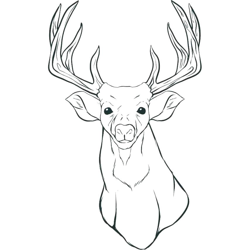 854x854 Deer Hunting Color Pages Kids Coloring Deer Color Pages Free Deer