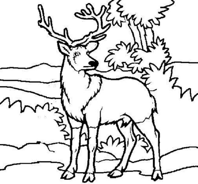 650x604 Deer Pictures To Color Free Printable Deer Coloring Pages For Kids