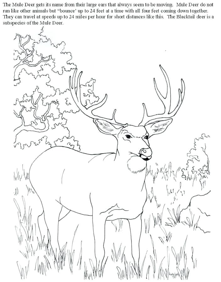 704x899 Free Deer Coloring Pages Deer Hunting Coloring Pages Bytes Free