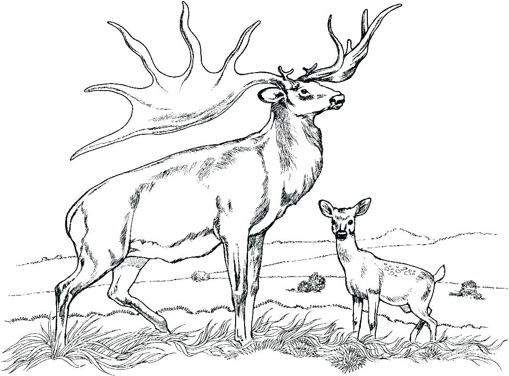1024x756 Free Deer Coloring Pages Free Deer Coloring Pages Deer Coloring