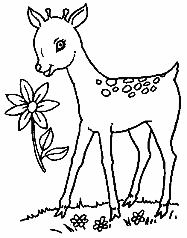 625x794 Baby Deer Coloring Pages