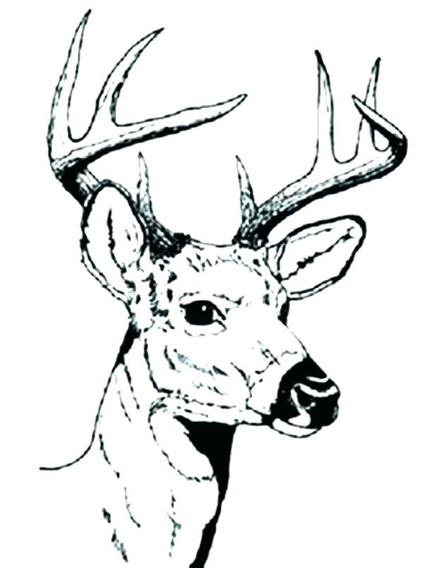 618x805 Whitetail Deer Coloring Pages Free Deer Coloring Pages Deer