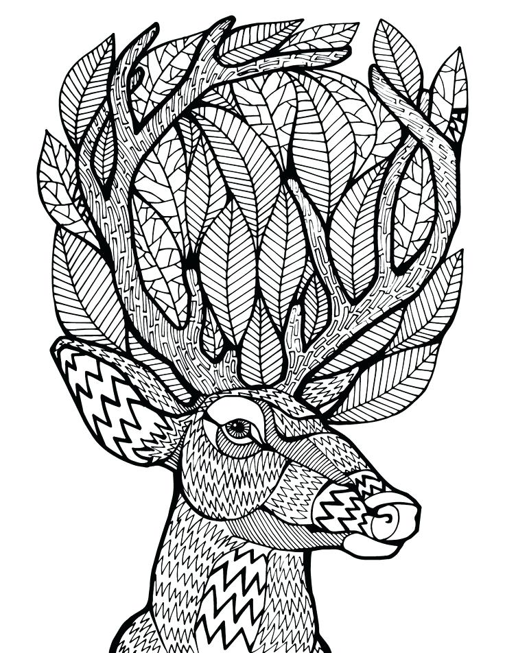 736x952 Coloring Pages Deer Adult Coloring Pages Deer Free Deer Hunting