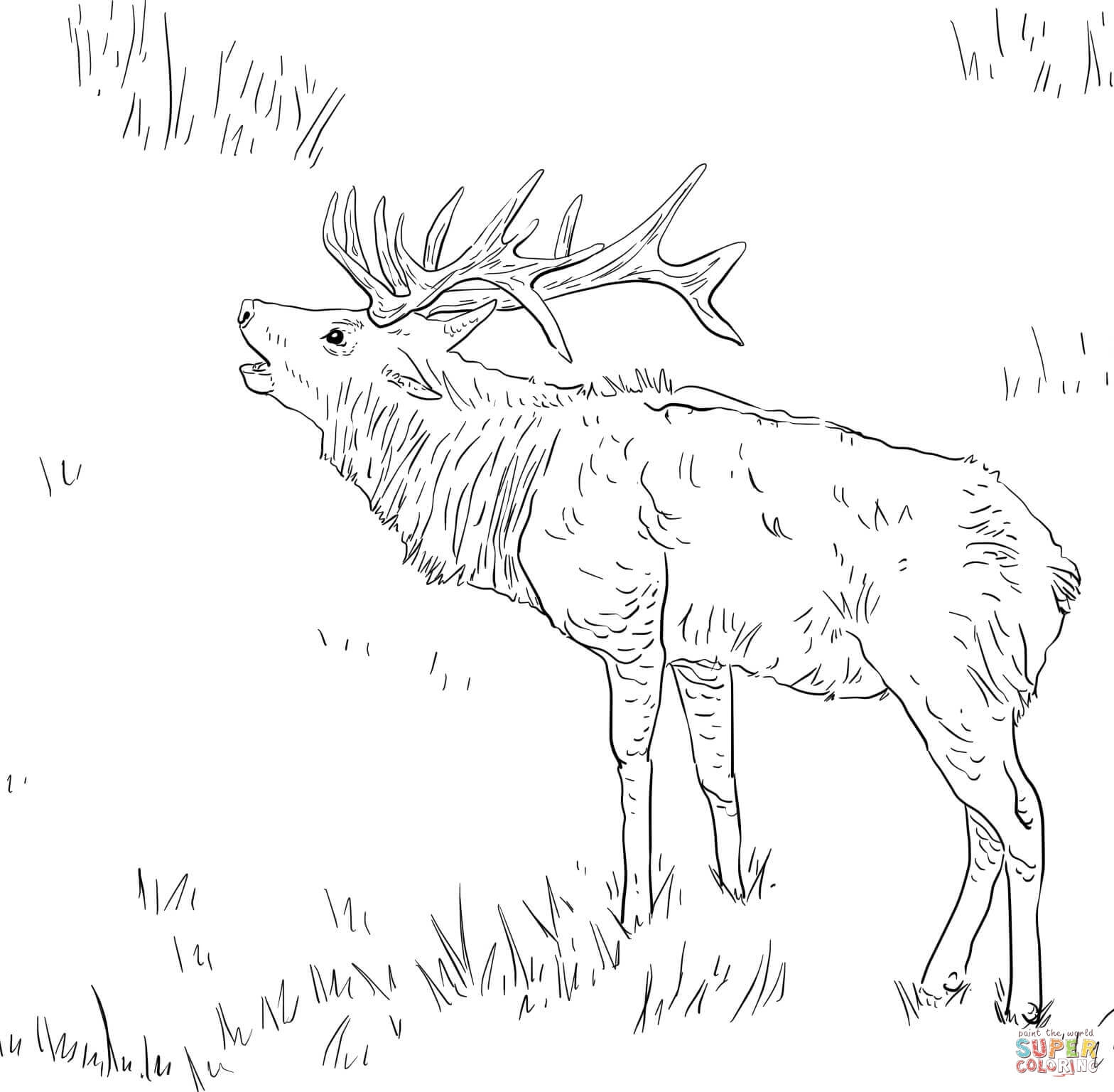 1568x1536 Deer Coloring Page Vitlt Download