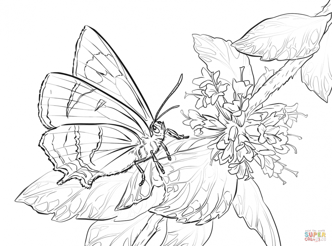 1080x800 Top Free Printable Butterfly Coloring Pages Animals Colouring