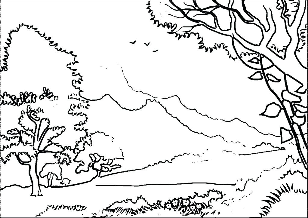 1024x725 Forest Coloring Page Best Forest Coloring Page Wallpapers