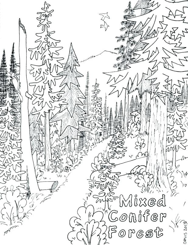 618x806 Forest Coloring Page Coniferous Forest Coloring Page Wonderful