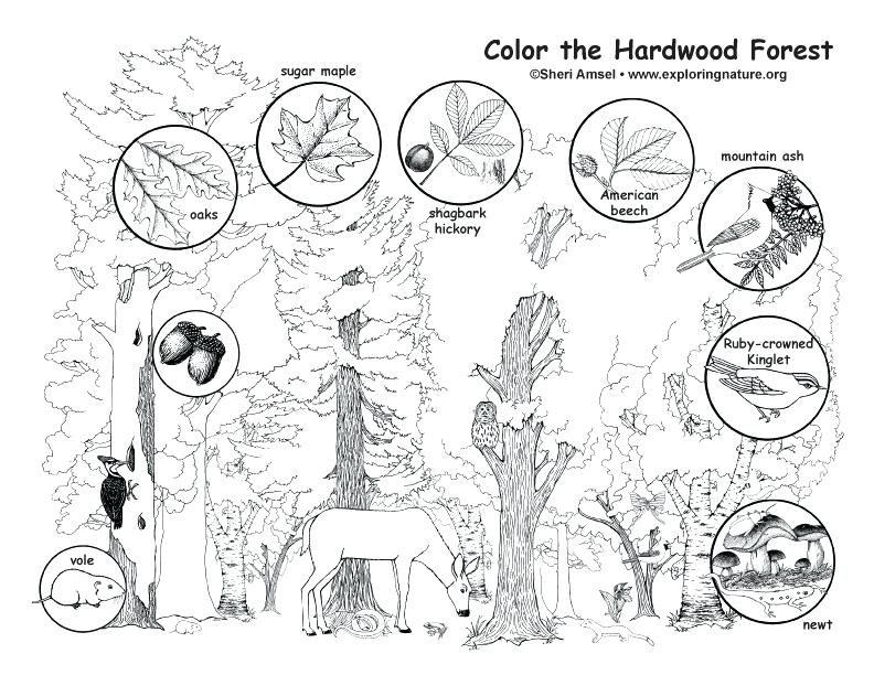 792x612 Forest Coloring Page Enchanted Forest Colouring Pages Free