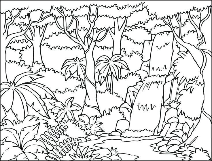 736x560 Forest Coloring Pages Free Printable Woodland Animals Coloring