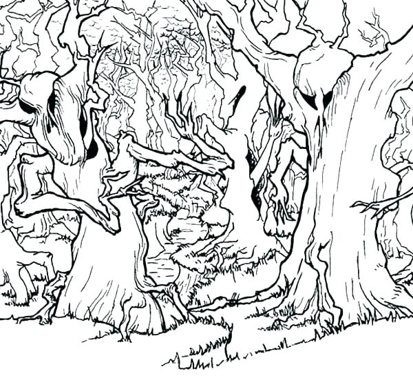600x561 Forest Colouring Pages Forest Coloring Sheets Enchanted Forest
