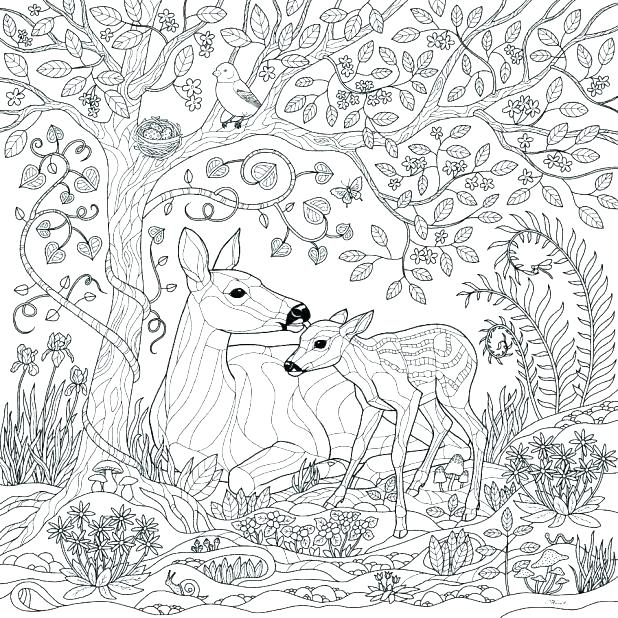 618x618 Forest Colouring Pages Rain Forest Coloring Pages Amazon Coloring