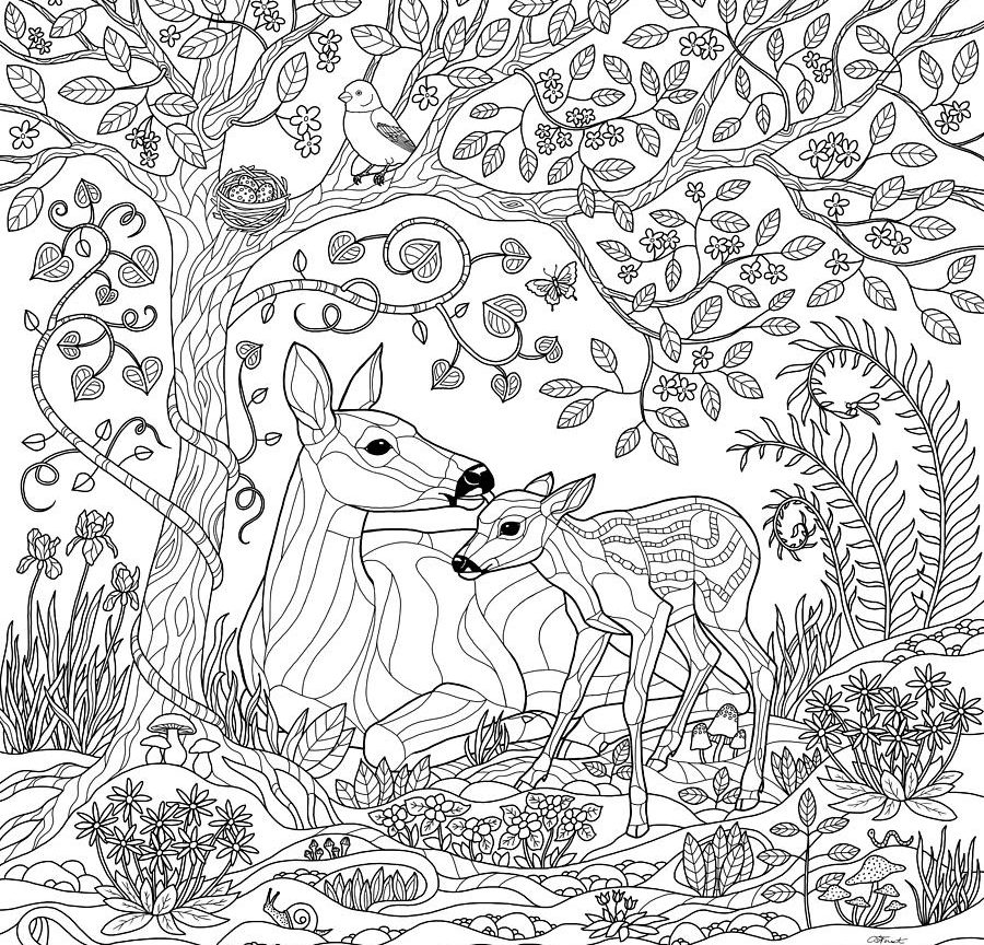 900x864 Coloring Page Lovely Sloth Forest Stock Vector Pages For Adults