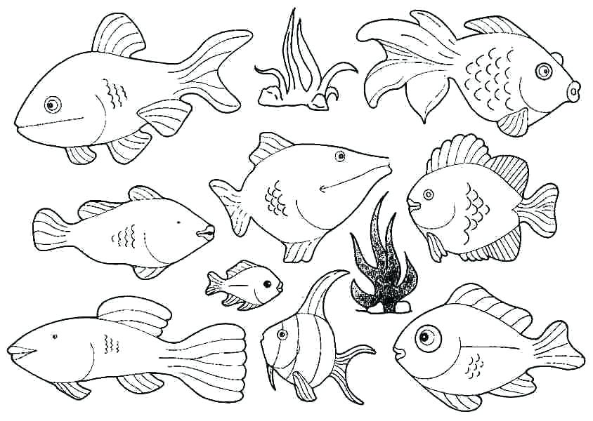 844x600 New Pout Pout Fish Coloring Page For Profitable Free Fish