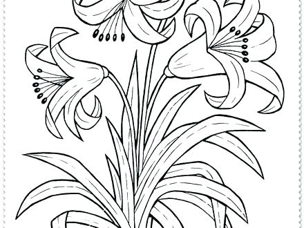 440x330 Flower Coloring Pages Free Download Lily Flowers To Color Flowers