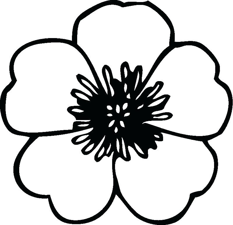 Free Floral Coloring Pages At GetDrawings Free Download