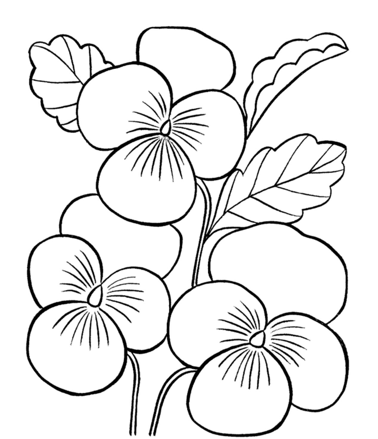 1266x1469 Fresh Orchid Flower Coloring Sheet Gallery Printable Coloring Sheet