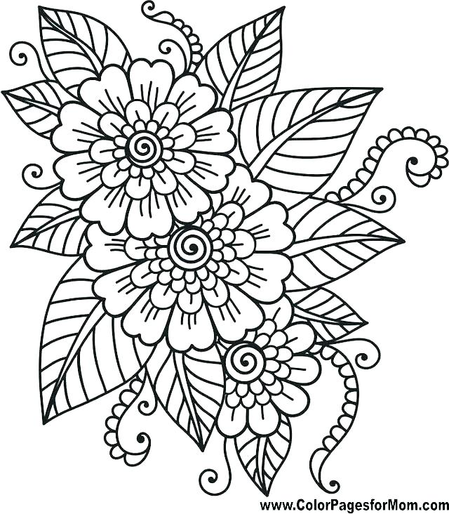640x732 Simple Flowers Coloring Pages Vanda