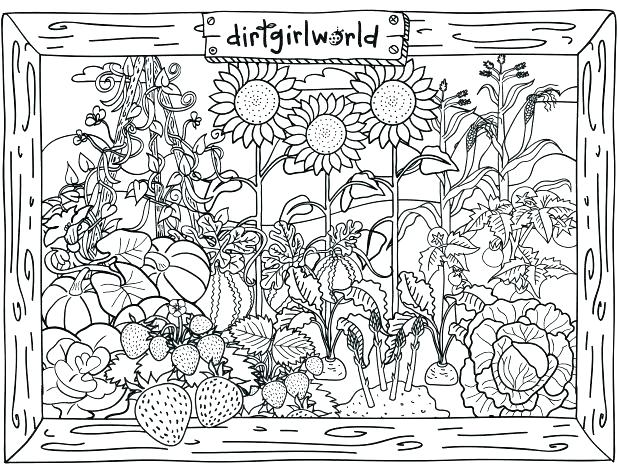 618x475 Vegetable Garden Coloring Page Vegetable Garden Coloring Sheets