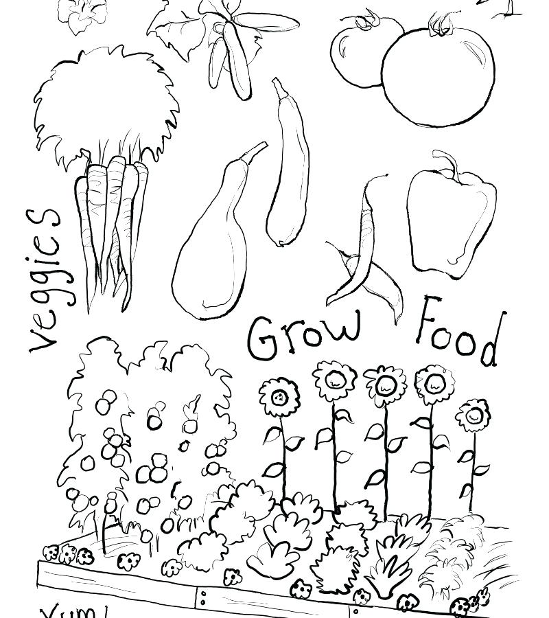 800x900 Vegetable Garden Coloring Pages Best Garden Coloring Page For Kids