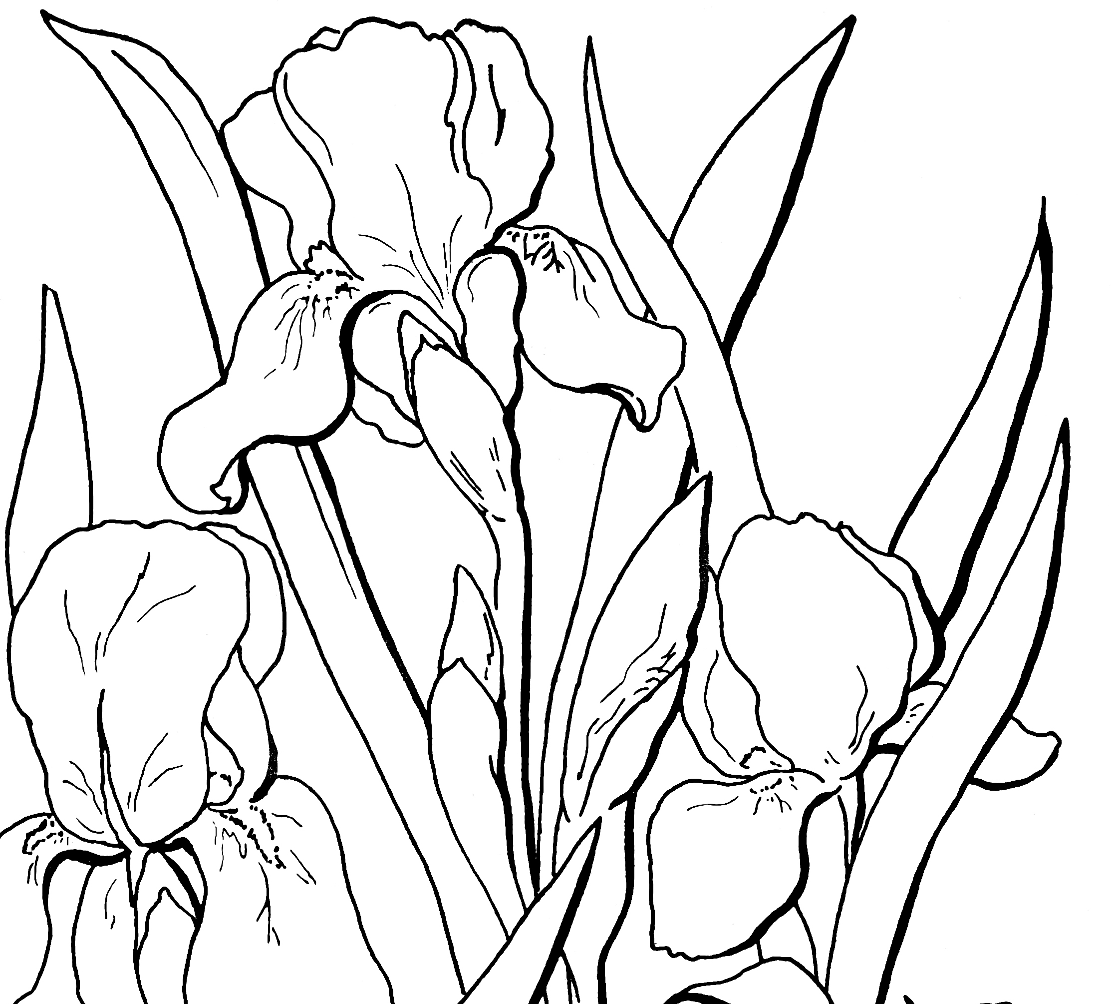 2226x2010 Free Adult Floral Coloring Page!