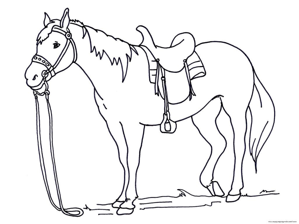 1024x768 Horses Colouring Pages Printable Horse Coloring For Kidsstic