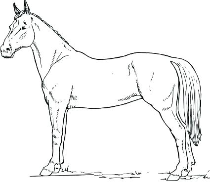 425x368 Free Horse Colouring Pages Online