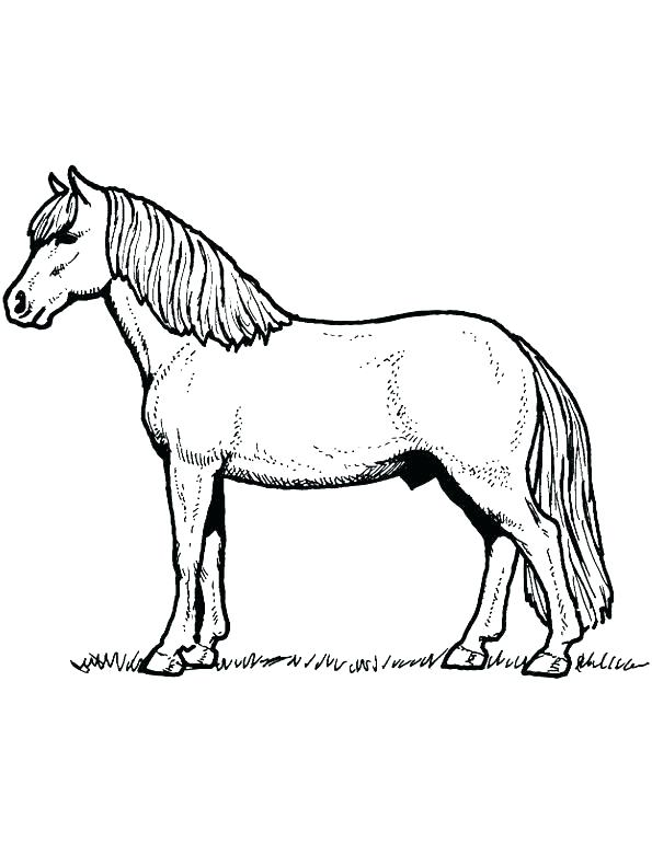 595x770 Free Horse Colouring Pages Online