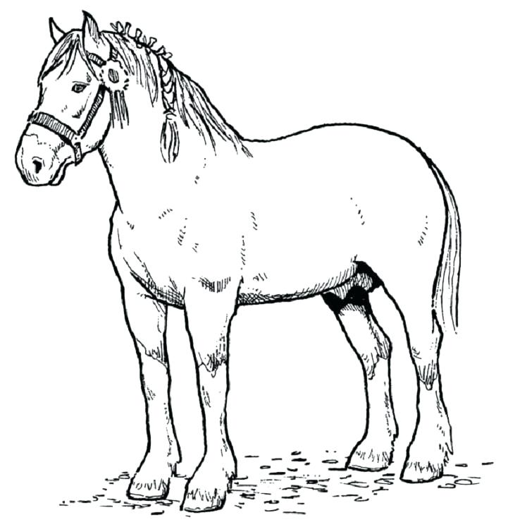 721x747 Horse Color Pages