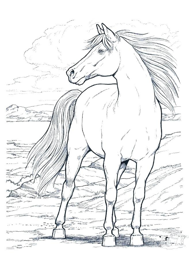 660x880 Horse Coloring Pages Online